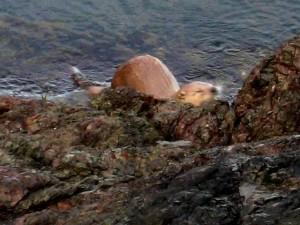 Otter San Juan CP