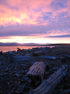 Image of driftwood tinged pink by setting sun Keystone Spit Whidbey Island WA
