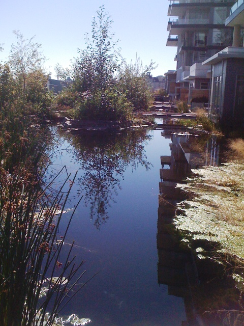 The stream at Dockside Green