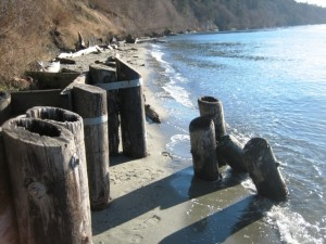 Pilings from the old beach stairs are still visible at South Whidbey State Park