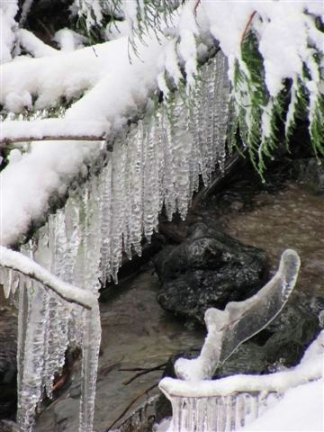 Image of ice covered branches during Whidbey Island ice storm
