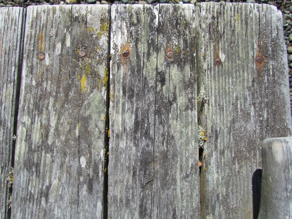 Lichen, algae and rust color the boards of a weathered dock.