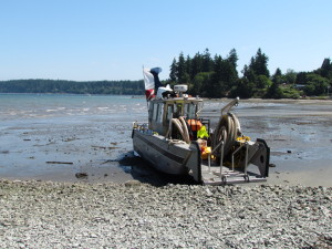 Beached salvage vessel