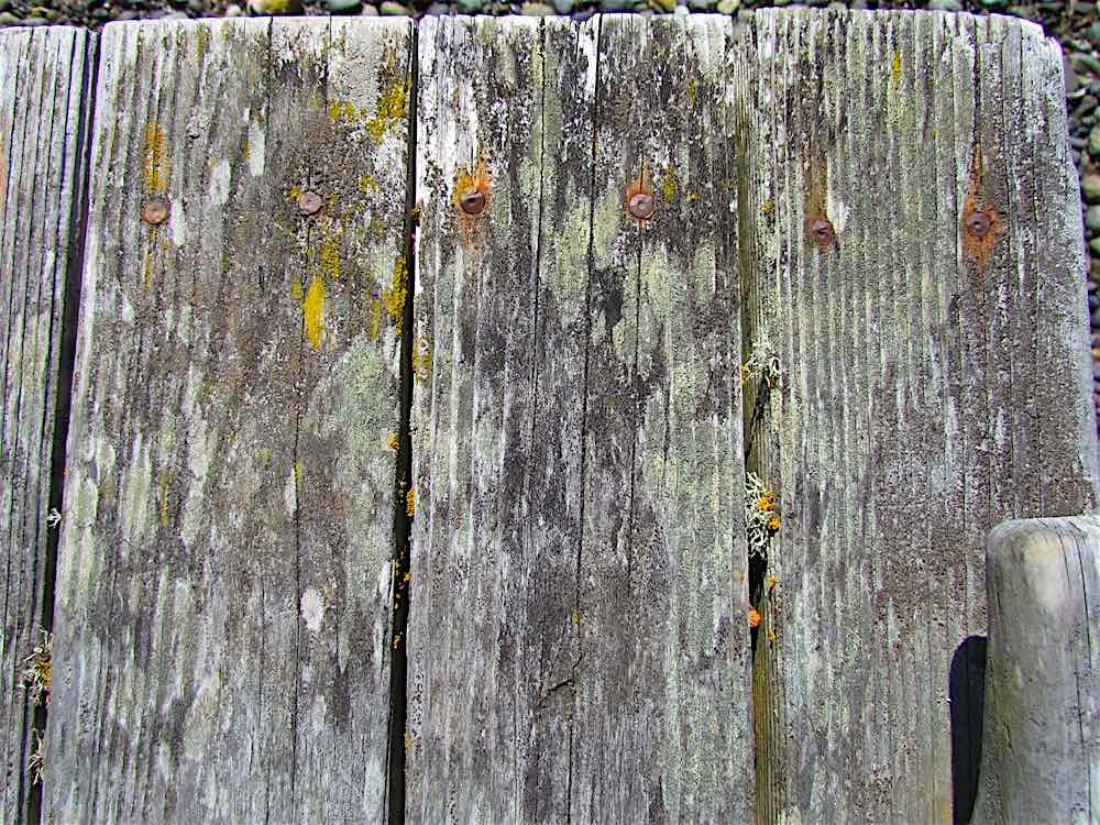 lichen algae weathered dock