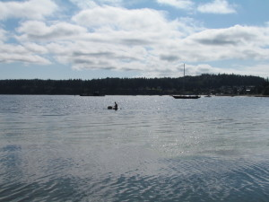 beautiful weather for reef building on Holmes Harbor