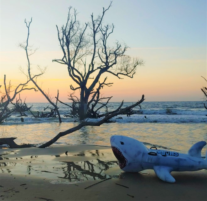 Inflatable shark washed up in maritime forest Hunting Island State Park