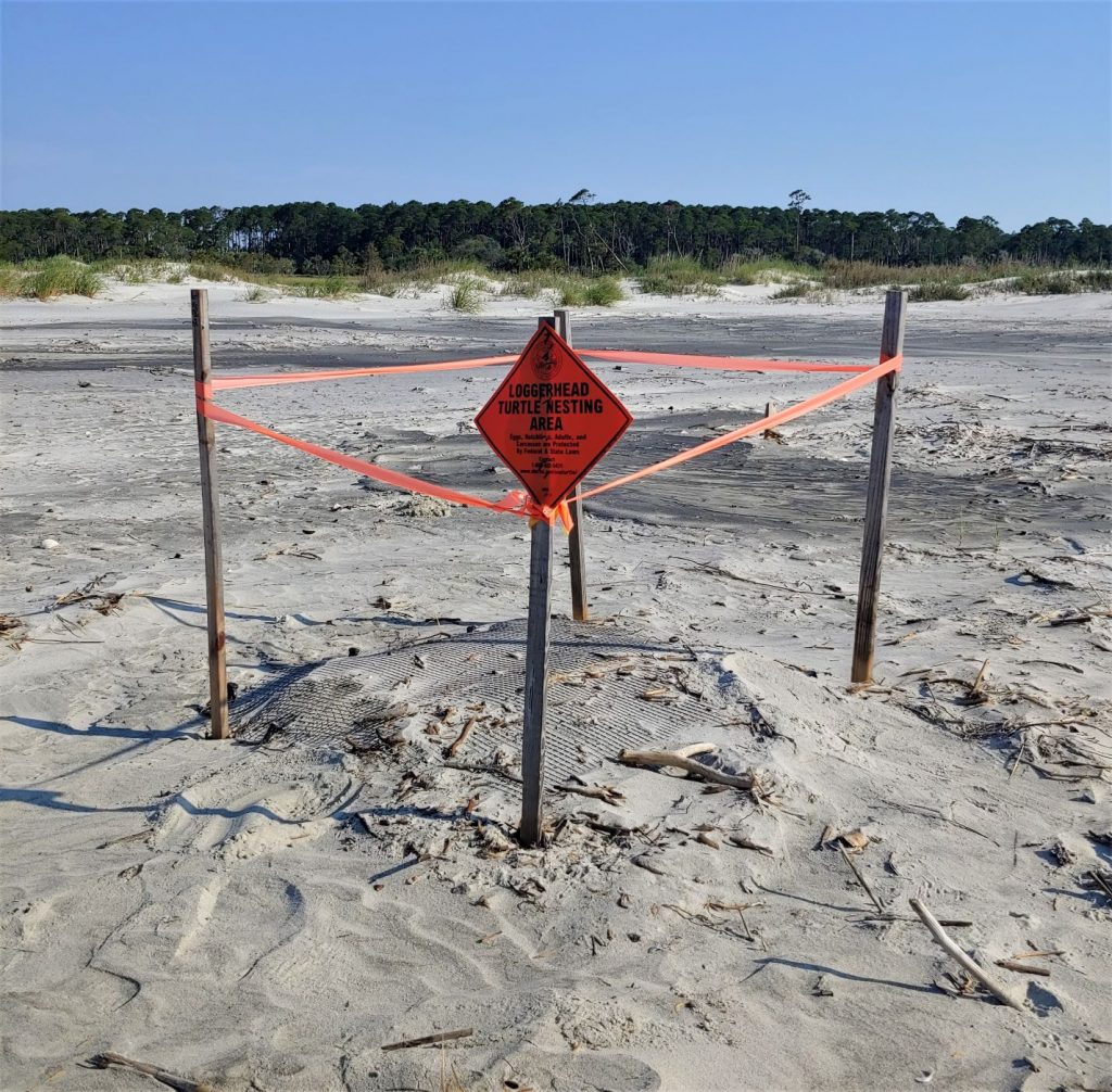 Sea Turtle nest at Hunting Island State Park