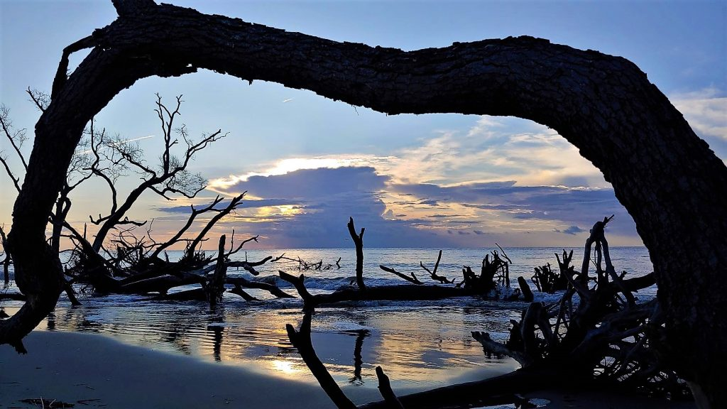 Sunrise through a beached tree, Hunting Island State Park